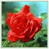Click to send a Daily Flower Card from AngelWinks