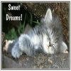 Click to send a Daily Good Night Card from AngelWinks